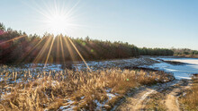 Dry Grass With Tall Stalks Thaws In The Sun. Frozen Forest Pond Is Covered With Snow. Clear Sunny Day In Early Spring