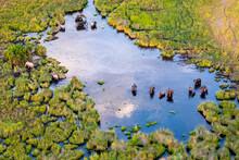 Aerial View To Wild Nature Of Delta Okavango In Botswana.