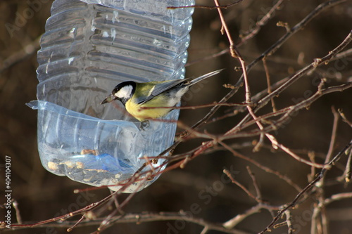 Photo The titmouse eats food from a feeder made from a plastic bottle