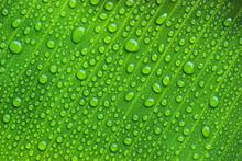 Full Frame Shot Of Green Banana Leaf