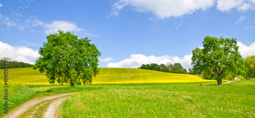 Fototapety, obrazy: Scenic View Of Agricultural Field Against Sky