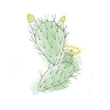 Green Flowering Cactus