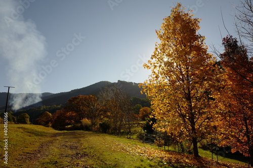 Fototapety, obrazy: Trees In Forest Against Sky During Autumn