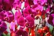 Leinwandbild Motiv Close-up Of Flowers Blooming On Tree