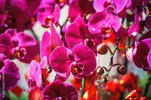 Obraz Close-up Of Flowers Blooming On Tree - fototapety do salonu