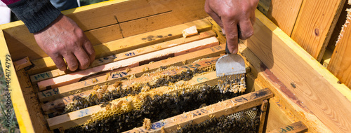 Foto A farmer on a bee apiary holds frames with wax honeycombs