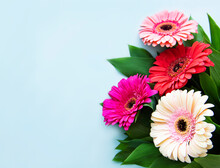 Bright Gerbera Flowers On A Blue Background