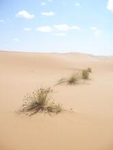Dunes De Sable Et Plantes - 1