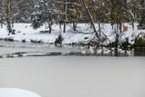 krajobraz zima staw ptaki zima