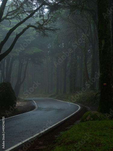 Foto mood forest rain