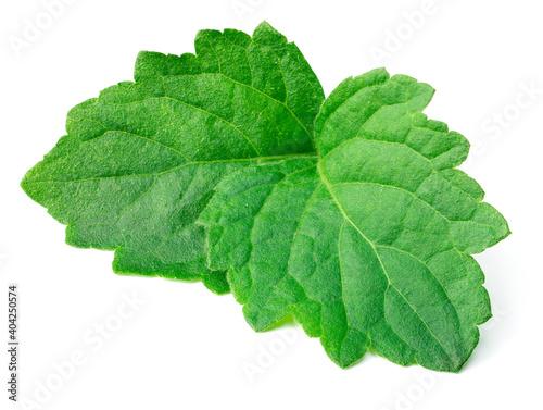Fototapeta fresh Patchouli (Pogostemon cablin) leaves isolated on the white background obraz