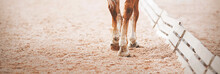 The Legs Of A Sorrel Horse Stepping Hooves On The Sand In An Outdoor Arena At A Dressage Competition. Equestrian Sports. Horse Riding. Trot.