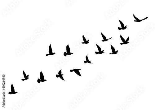 Canvas-taulu Flying birds silhouettes on white background
