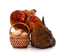 Two Brown Chickens With Eggs In A Basket..