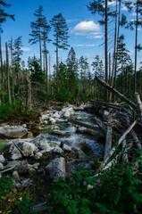 Połamane drzewa nad potokiem w górach Tatrach