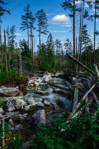 Połamane drzewa nad potokiem w górach Tatrach - fototapety na wymiar