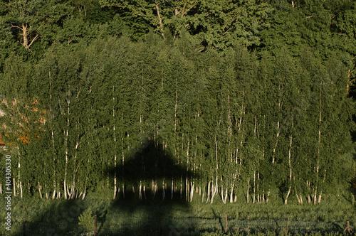 Fototapeta Odbicie sylwetki wieży widokowej na tle ściany lasu obraz