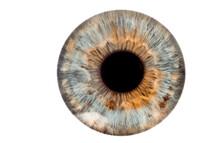 Eye Isolated On White
