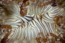 Close Up Detail Of Sea Anemone