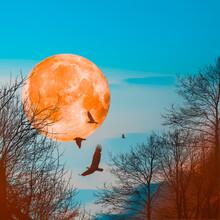 3D Illustration. Large Orange Moon Against The Blue Sky.