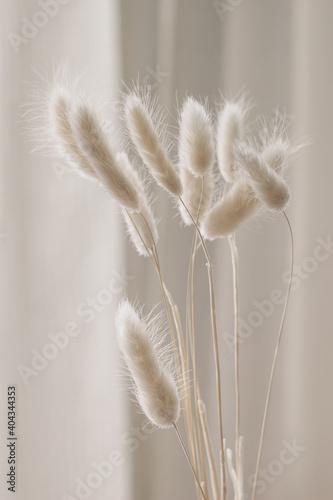 Fototapeta Close-up of beautiful creamy dry grass bouquet