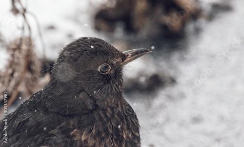 Fototapeta premium Close-up Of Bird Perching Outdoors