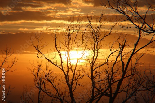 Obraz Silhouette Bare Tree Against Orange Sky - fototapety do salonu