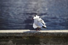 Seagull On A Wall