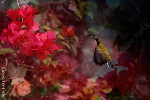 Fototapeta premium Close-up Of Hummingbird Flying By Plant