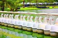Group Of White Duck Paddle Boats Waiting For Service People In Public Pond