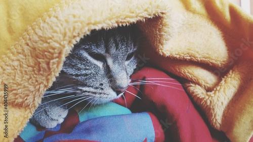 Obraz na plátně Close-up Of A Cat Resting