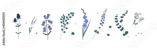Fotografia Set of wild and garden flowers and decorative green plants isolated on white background
