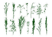 Green Wild Herbs Isolated On White - Set Of Field Grass Silhouettes - Elements For Natural Design