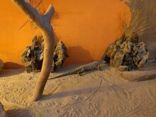 Lizards Near A Dead Tree On Sand Dune