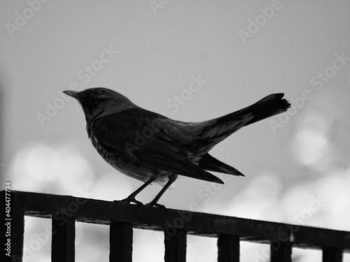 Fototapeta premium Bird Perching On Railing