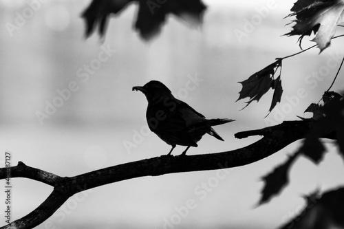Fototapeta premium Low Angle View Of Bird Perching On Branch