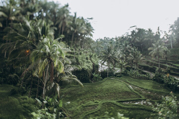 Tagalong Rice Terrace