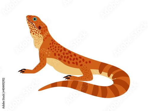 Tropical reptile. Cartoon zoo character, wild orange bearded dragon, vector illustration of terrarium lizard isolated on white background