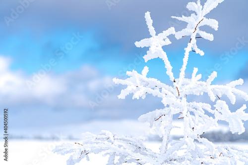 Canvastavla 【冬イメージ】厳しい冬