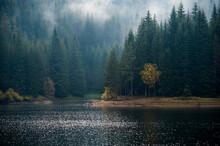 Fogy Lake Forest Landscape Background