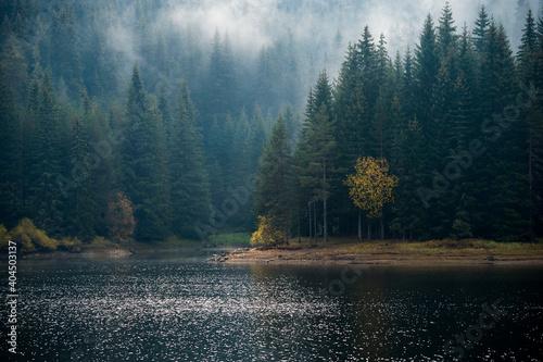 Obraz na plátně Fogy lake forest landscape background