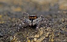 Close-up Of Tarantula On Land