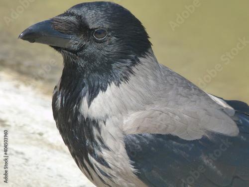Fototapeta premium Close-up Of Bird Looking Away
