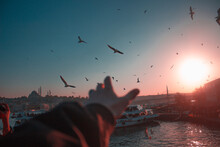 Cropped Hand Of Person With Birds Flying Over River In City