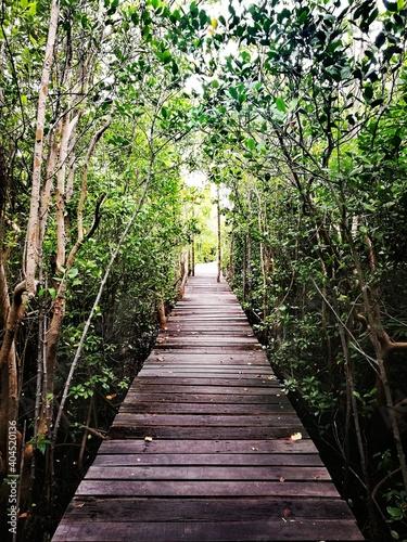 Fototapety, obrazy: Boardwalk Amidst Trees In Forest