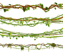 Set Of Isolated Jungle Vines, Twisted Liana Plant