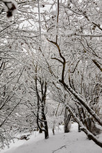 Heavy Snowfall Sweeps Across The Yorkshire Smallholding At 900ft And Transforms A Woodland Glade