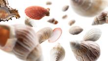 Beautiful Seashells Levitate On A White Background