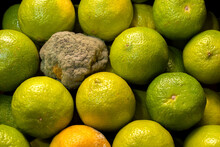 Rotten Lime With Mold. Spoiled Citrus Packaging.