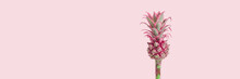 Close Up Dwarf Ornamental Pineapple Red Mini Flower On Pink Banner. One Tropical Bloom Per Stem